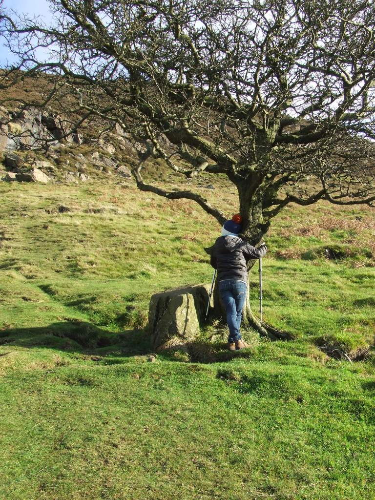 HUGGING THE FAIRY TREE ON SLEMISH