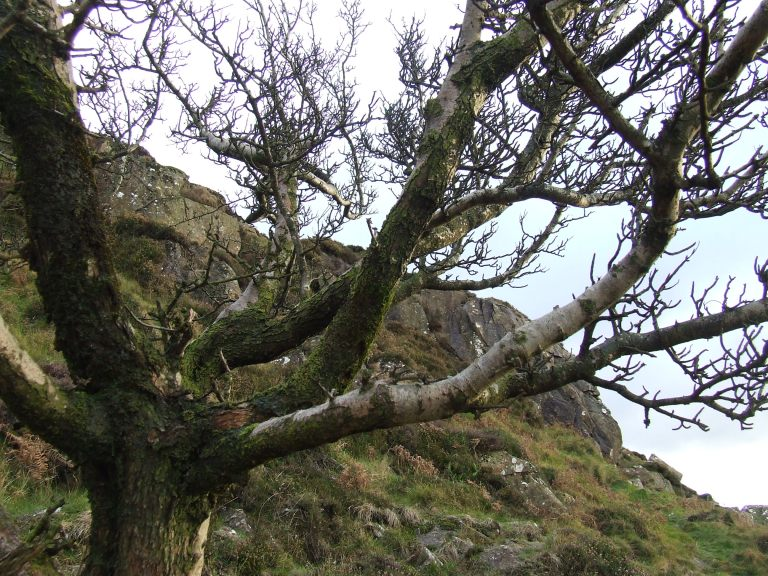 FAIRY TREE 0N SLEMISH